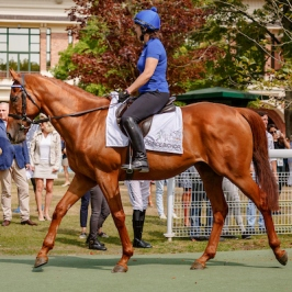 Prince Bichop Au Dela Des Pistes Champions Parade in Deauville, France 26/08/2017 photo: Zuzanna Lupa