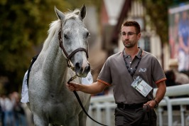 Parade des Champion - MARCHAND D'OR - @zuzanna Lupa Photography