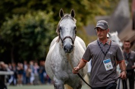 Parade Des Champions - SOLOW - @zuzanna Lupa Photography