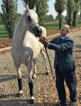Lo sceicco del QatarHamad Bin Ali Al Thani